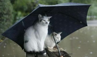 funny-pictures-cats-umbrella-rain-f111-1.jpg